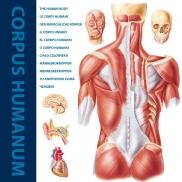 Corpus Humanum Int.