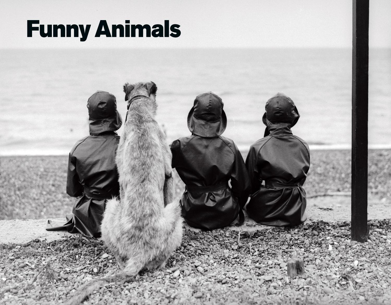 PP Funny Animals