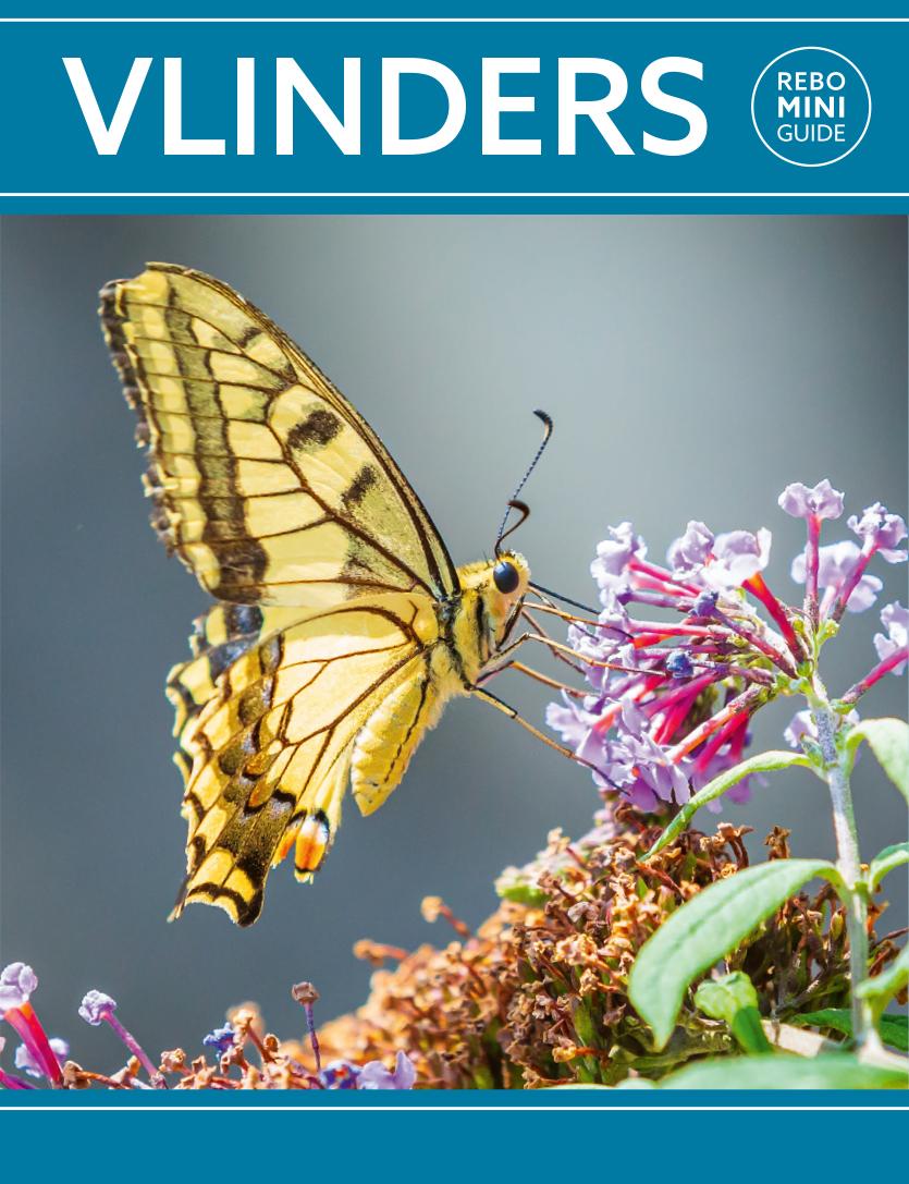 Vlinders - Rebo Mini guide