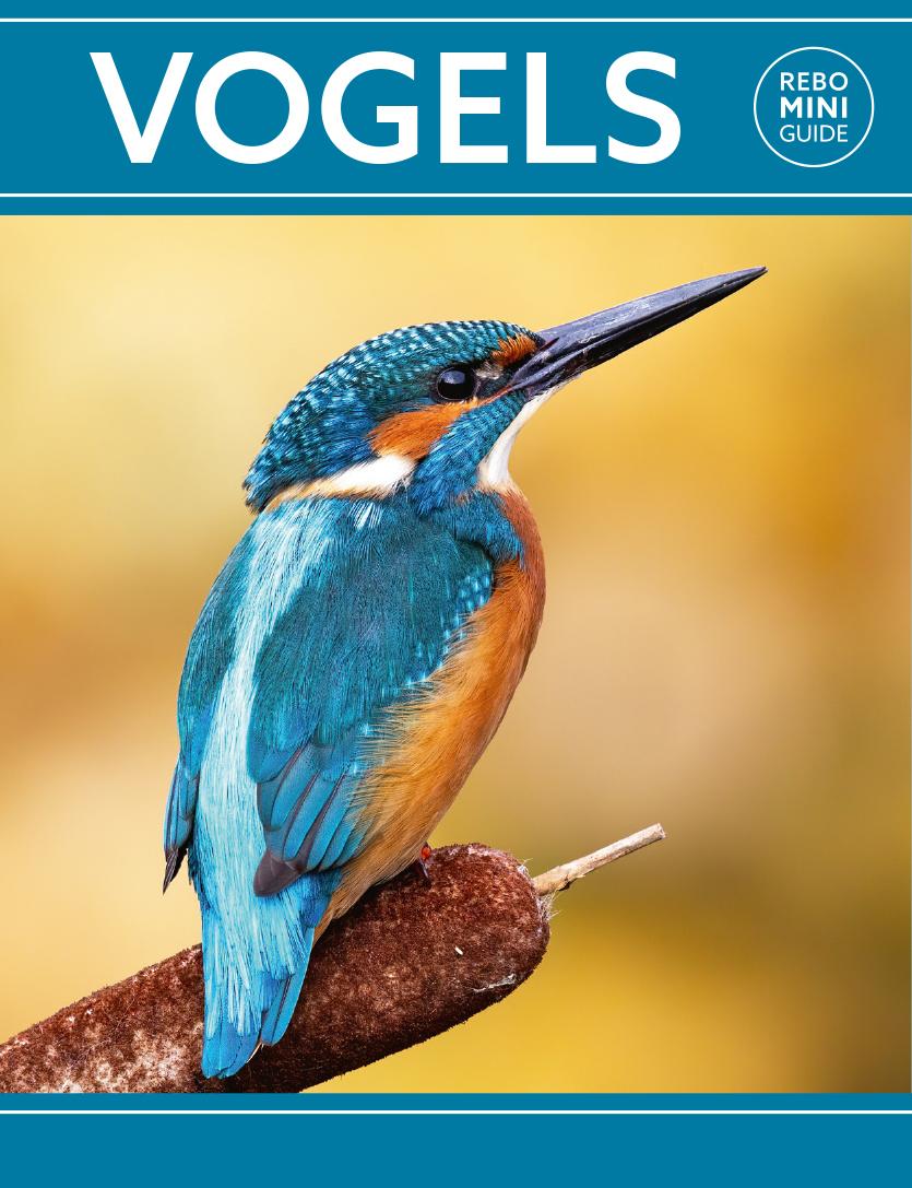 Vogels - Rebo Mini guide